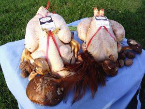 Coq Vierge - tradition des coteaux